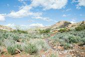 Spring Stream In No Thoroughfare Canyon
