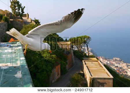 Gull over Gibraltar