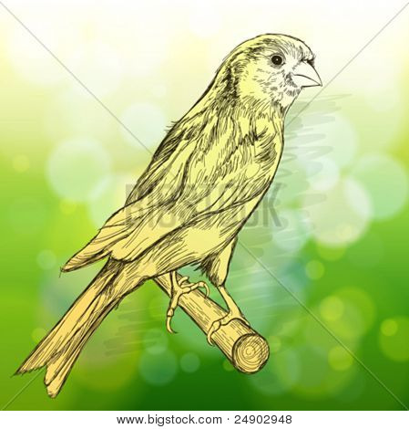 sketch of a canary bird sitting on a branch