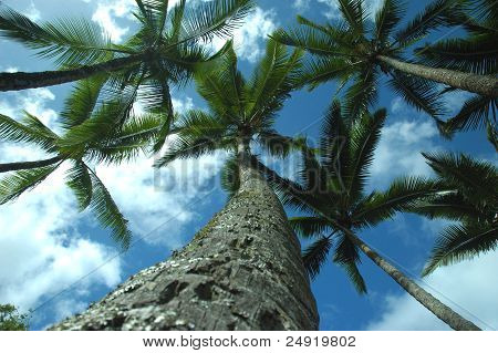 Strong Palm tree touches the sky.