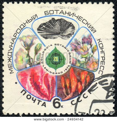 International Botanical Congress