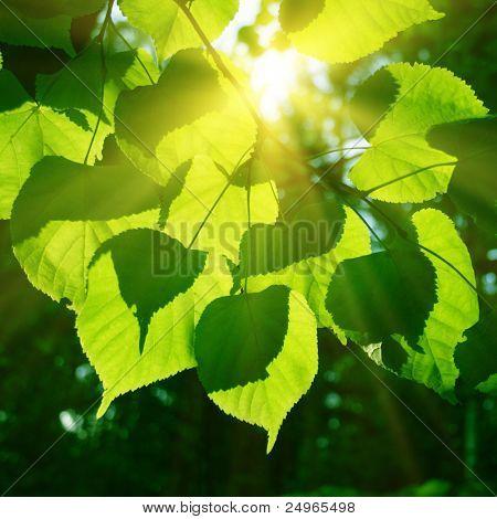 Tree foliage and sun.