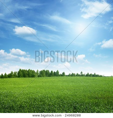 Beautiful summer landscape.