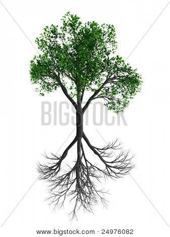 dry tree & live tree