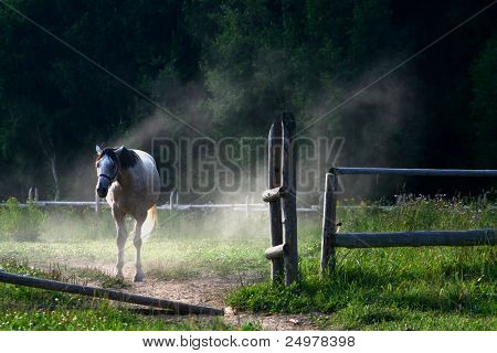 White horse leaving fence in wind and dust