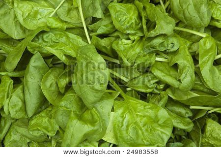 Fresh green spinach