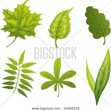 Different green leafs isolated on white