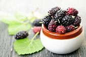 image of mulberry  - Ripe mulberry berries in a bowl freshly picked - JPG