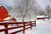 Rural Landscape With Red Barns, Wooden Red Fence, Trees And Road Covered By Fresh Snow. Scenic Winte poster