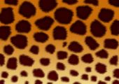 Structure For A Background - A Fluffy Skin Of A Leopard poster