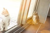 cat at home, fat tabby cat in the house poster