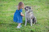 West Siberian Laika Walking With Little Girl, Friendship Og Child And Pet. poster
