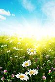 Постер, плакат: Поле цветка Голубое небо и солнце