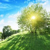 stock photo of sun rays  - Sun shining through tree - JPG