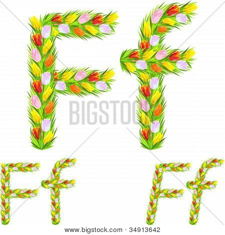 Vector Font Type Letter F Made From Flower Tulip