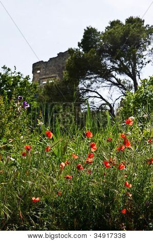 Poppies Surrounding The Castle