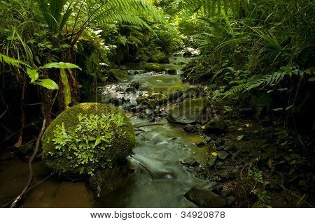 Water stream with fern