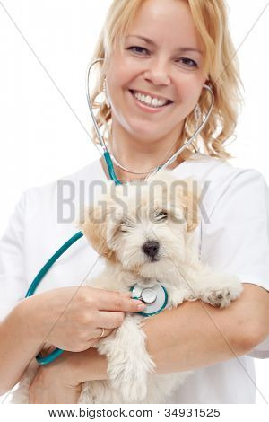 Small fluffy dog at the veterinary doctor - isolated, closeup