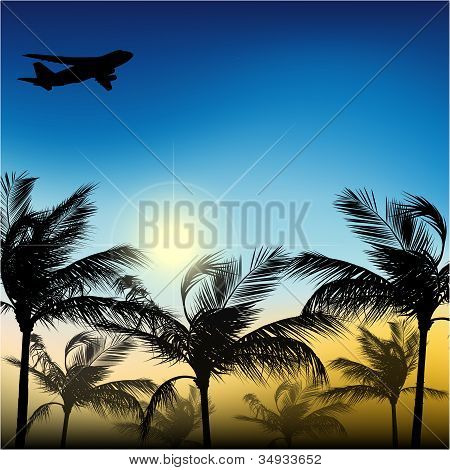 Palm trees and airplane