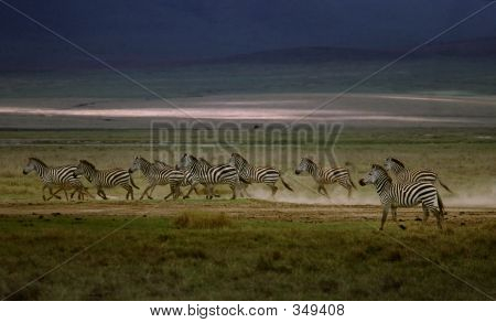 Zebra Running Across African Plain