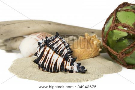Sea Still Life With Shell And Driftwood