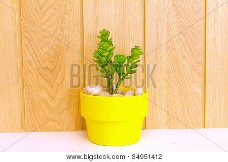 Coleção de Daisy árvore em vaso amarelo.