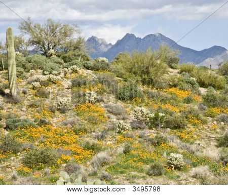 Desert Cactus And Wildflowers