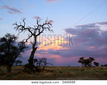 Puesta de sol del desierto