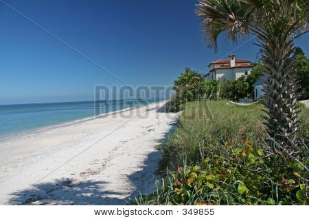 Beach_house_palm