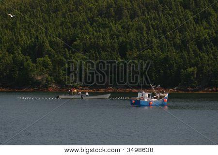 Caplin Trap Fishing