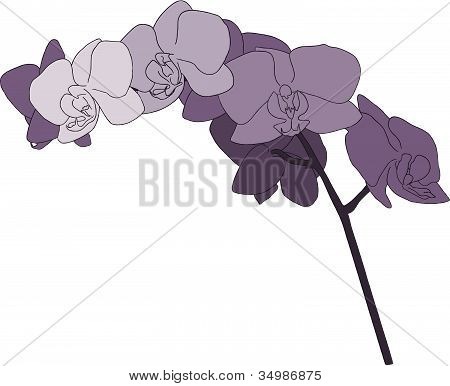 Purple Orchid Stem Illustration