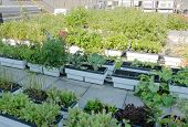 stock photo of planters  - Planters on roof garden on top of urban building - JPG