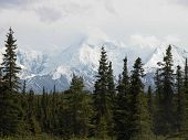 stock photo of denali national park  - One of the closest approaches to North America - JPG