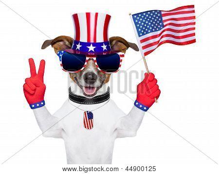 Perro americano usa