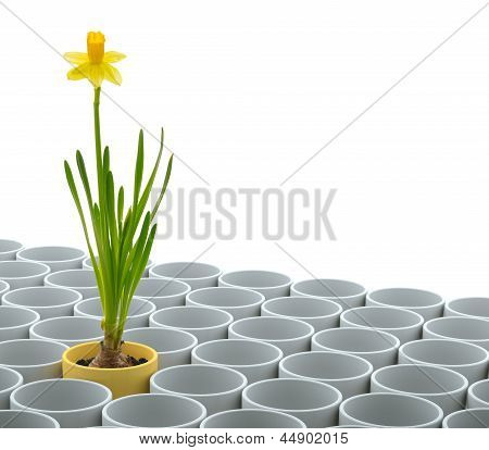 Yellow Narcissus Flower And Flowerpot Set