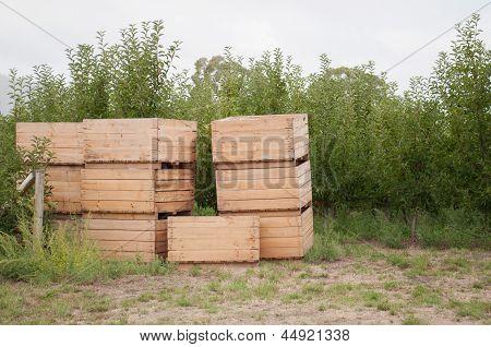 Empty Apple Boxes