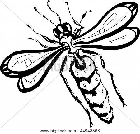 wasp over white background