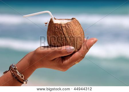 Coconut In A Woman's Hand