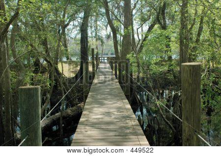 Suwannee River Boardwalk 2