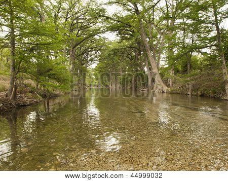 Bald Cypress Trees Along The Riverbank