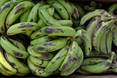 foto of potassium  - Green bananas Texture