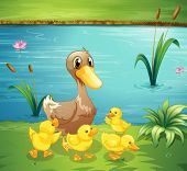 stock photo of duck pond  - Illustration of a mother duck with her ducklings in the river - JPG