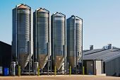 stock photo of silo  - large scale commercial chicken farm with four grain storage silos for the storage of poultry feed - JPG