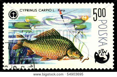 Vintage  Postage Stamp. Fish Carp.