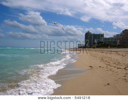 Miami Beach & Seashore