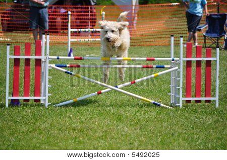 Perro saltando sobre un doble salto en el juicio de agilidad del perro