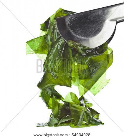seaweed kelp ( laminaria ) close up isolated on white background