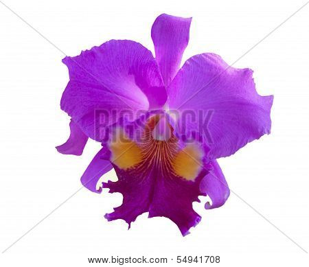 di-cut beautiful single purple tropical orchid flower isolated on white background use for natural o