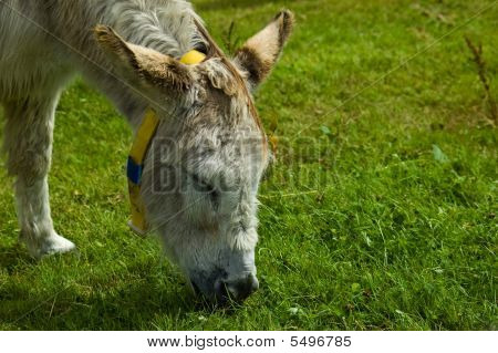 White Rescue Donkey