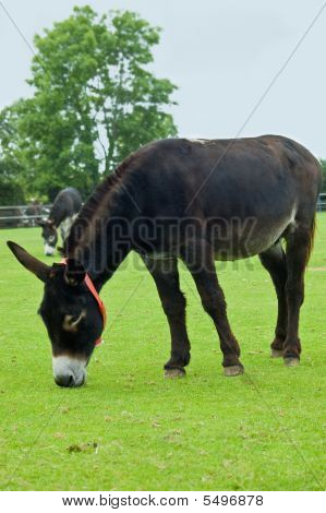 Two Brown Rescue Donkeys